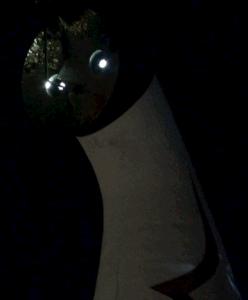 「イルミナイト万博 夕涼み」に行って来ました。動画あり